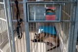 """Schronisko Na Paluchu apeluje o adopcję zwierząt. Nie wszyscy jednak przechodzą procedury. """"Nie dostali psa, bo pracują na etat"""""""