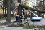 Gdynia: Flesz z przeszłości. 08.02.2011. Niszczycielska wichura nawiedziła miasto. Były poważne szkody