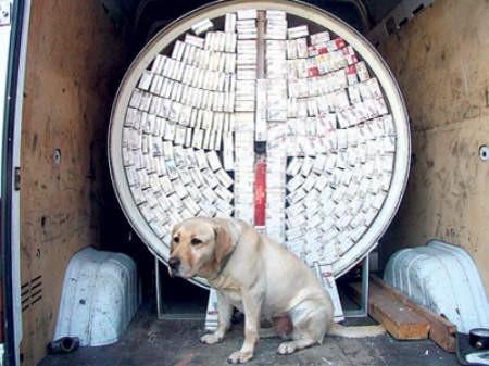 Drachma to prawdziwy pies na tytoń.