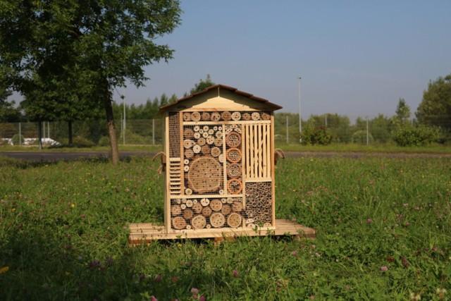 W Dąbrowie Górniczej pojawiły się nowe domki dla owadów i łąki kwietne ze słonecznikami Zobacz kolejne zdjęcia/plansze. Przesuwaj zdjęcia w prawo - naciśnij strzałkę lub przycisk NASTĘPNE