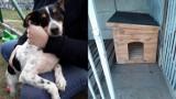 Nowe budy w przytulisku dla psów. Warunki z roku na rok są tu coraz lepsze