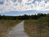Pomysł na wyjątkowy spacer: Rezerwat Sieciemińskie Rosiczki