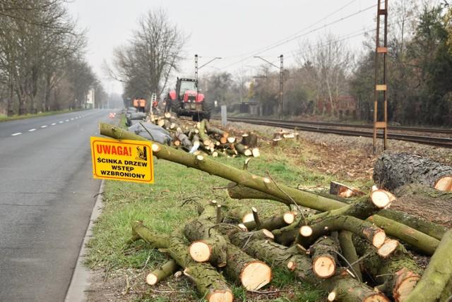 Wycinka drzew wzdłuż linii kolejowej biegnącej przy ul. Marka z Jemielnicy. Pod topór tylko tutaj przeznaczono około 200 drzew.