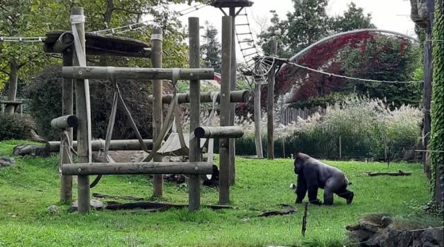 Ogród zoologiczny.