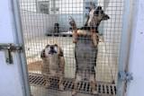 Walczymy o Zwierzęta! Dzień otwarty w schronisku w Lublinie (ZDJĘCIA)