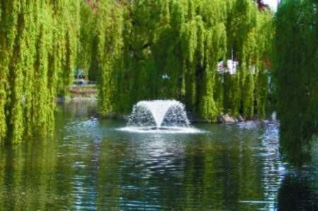 Urządzenie do napowietrzania wody wygląda jak fontanna.  FOT. Bernard Łętowski
