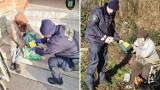 Akcja Zima w Legnicy. Straż Miejska pomaga bezdomnym  i rozdaje pakiety żywnościowe