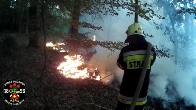Chmura dymu nad lasem nigdy nie wróży nic dobrego. Tak było i tym razem. W sobotę po godzinie 20 zauważono ogień na terenie kompleksy leśnego między Sielinkiem, a Kopankami w gminie Opalenica.  Zobacz więcej: Groźny pożar lasu w okolicach Sielinka. Ogień szybko się rozprzestrzeniał [ZDJĘCIA]