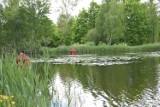 Atrakcje turystyczne w Żarach i okolicy. Basen w Kunicach dosłownie tonie...w zieleni. Dookoła akwenu można pospacerować
