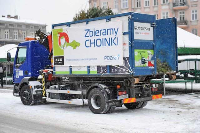 Poznańskie choinki wracają do środowiska