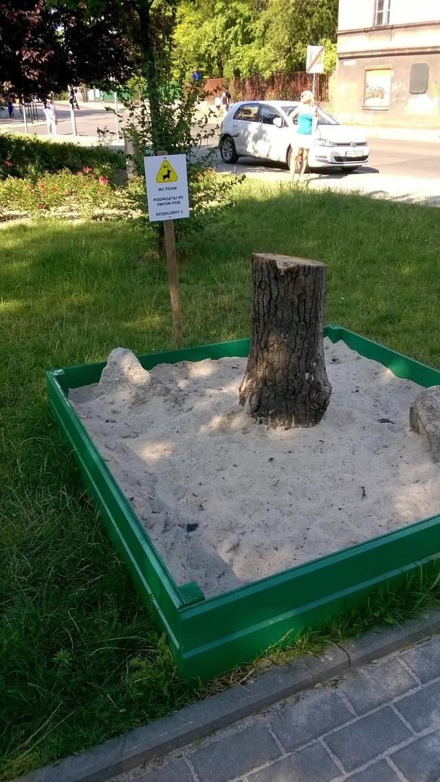 Toaleta dla psów na placu Hiolskiego, za Miejską Biblioteką Publiczną. Na razie chętnych do skorzystania brakuje...