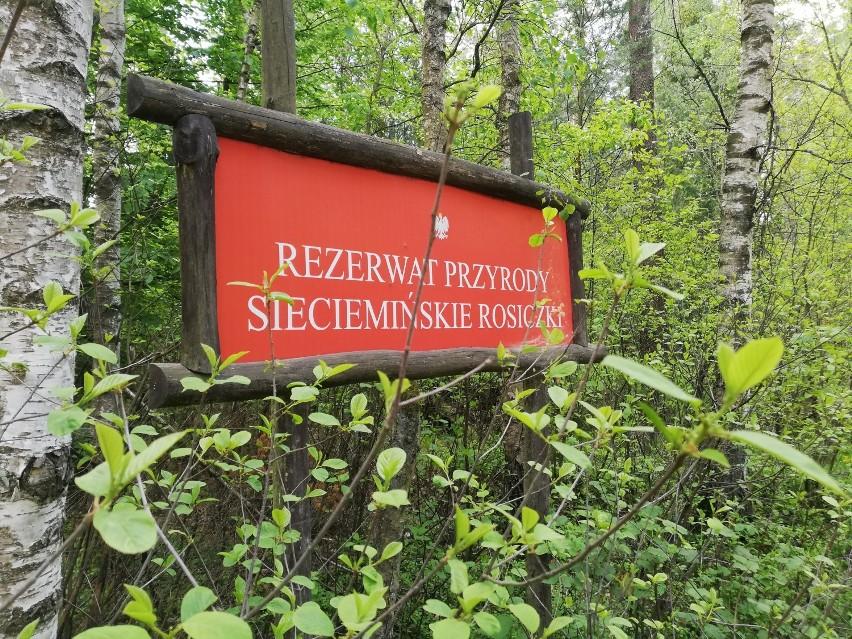 Rezerwat Sieciemińskie Rosiczki
