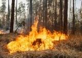Znowu się paliło! Informacje o pożarach wywołują ciarki na plecach...