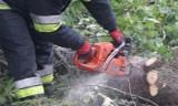 Silny wiatr w Żorach łamał drzewa i uszkodził przystanek