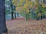 Park-arboretum w Gołuchowie. Zobacz go w jesiennej szacie. ZDJĘCIA