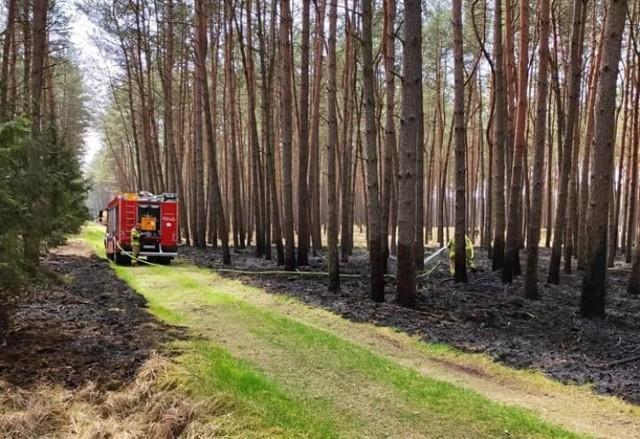 W pobliżu węzła Rzęśnica pod Goleniowem paliło się poszycie leśne