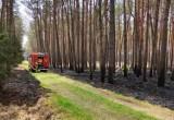 Pożar lasu pod węzłem Rzęśnica. A akcji między innymi dromadery