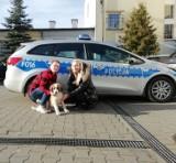 Policjanci uratowali zagubioną suczkę. Psa o mało nie potrącił samochód!