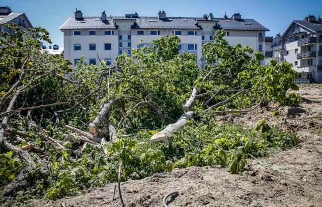 Wycinka drzew przy ul. Myśliwskiej w Gdańsku