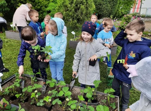 Przedszkolaki posadziły warzywa, zioła i owoce. Teraz będą czekać na zbiory   Zobacz kolejne zdjęcia/plansze. Przesuwaj zdjęcia w prawo - naciśnij strzałkę lub przycisk NASTĘPNE