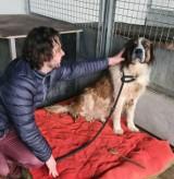 Psy z pseudohodowli w Brzegu szukają nowych i kochających domów