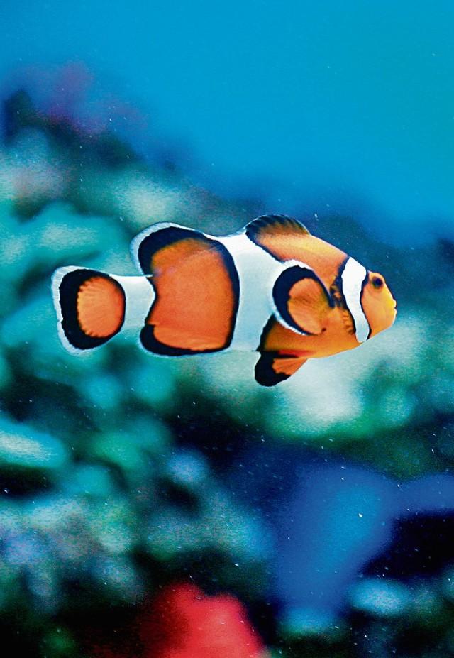 serwis randkowy ryby w morzu pytania, które należy zadać komuś, z kim się niedawno spotykasz