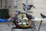 Sikora, Dzięcioł, Kowalik, Mazurek - zobacz, jakie ptaki możesz spotkać w Lesie Kabackim