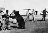 Miś Wojtek z Żagania! Poznaj niesamowitą i wzruszającą historię niedźwiedzia, który został żołnierzem!