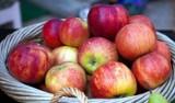 Jabłka i ich właściwości zdrowotne. Dlaczego warto jeść te owoce?