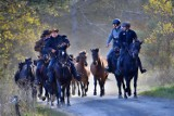 Koński redyk w Regietowie. Sceny jak z westernu! Tabun koni przebiegł przez wieś. Hucuły wróciły z letnich pastwisk