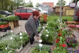 Międzyrzecz. Na targowisku oblężenie stoiska z ziołami. Klienci na potęgę kupują sadzonki, aby hodować je na działkach czy balkonach