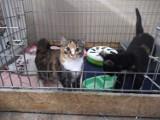 Uciekł Ci pies lub kot? Te zwierzęta trafiły do Schroniska dla Zwierząt w Bydgoszczy w ostatnim czasie [zdjęcia]