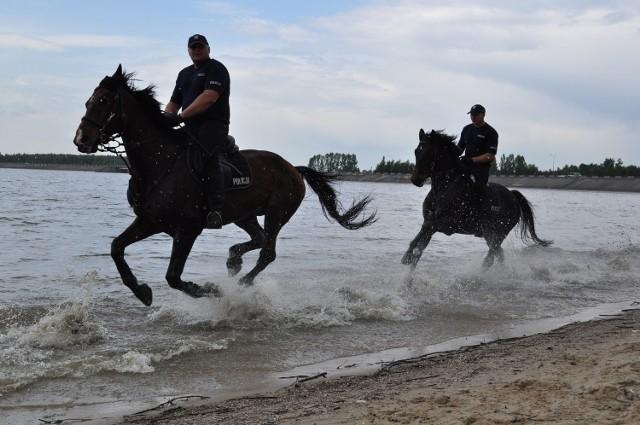 Atestację przechodziło pięć koni