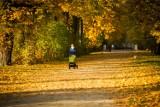 Pogoda w Łodzi i regionie na środę 18 października