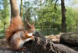 15 zasad bezpiecznych wypraw do lasów w dobie koronawirusa