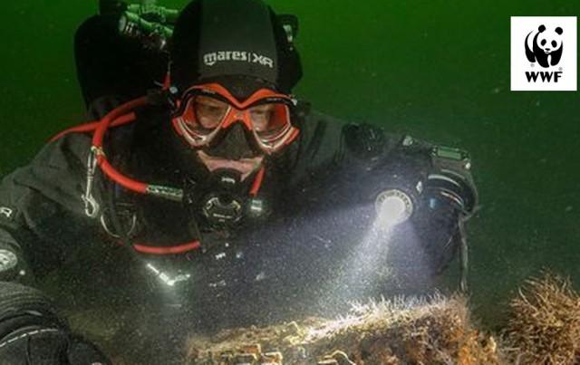 Sieci widmo, to zagubione lub utracone w inny sposób sieci rybackie, stanowiące śmiertelne zagrożenie dla zwierząt morskich. Pozostawione w morzu, cały czas robią to, do czego zostały zaprojektowane i stworzone – łowią. W tym roku złowiły Enigmę niemiecką maszynę szyfrującą z II wojny światowej! Nurkowie, którzy odnaleźli Enigmę, działali na zlecenie WWF Niemcy.
