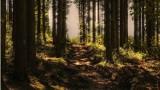 Koniec spacerów wśród drzew. Rząd zakazuje wejść do lasów