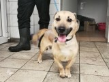 Psy do adopcji z toruńskiego schroniska. Te zwierzęta czekają na nowy dom
