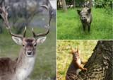 Te zwierzęta możesz spotkać w Legnicy i okolicach. Jedne piękne, inne groźne... [ZDJĘCIA]