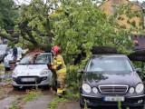 Podczas burzy w Przemyślu drzewo runęło na komis samochodowy. Kilka aut zostało zniszczonych [ZDJĘCIA]