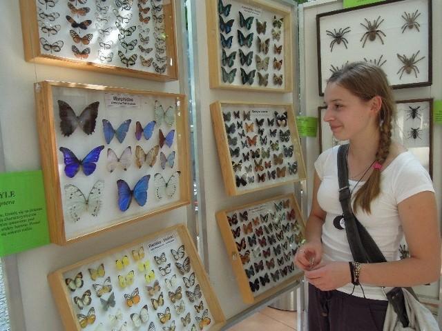 Wystawa motyle i pająki w Palmiarni w Łodzi