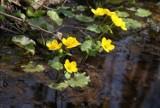 Wiosnę widać z naszych okien. Zdjęcia naszych czytelników