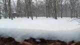Zielona Góra. Park Tysiąclecia w zimowej odsłonie zadziwia. Czym? Zobacz zdjęcia!