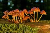 Grzyby pod ochroną. Jakie grzyby są objęte ochroną w Polsce?