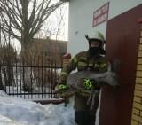 Sarenka zaplątała się w ogrodzenie. Z pomocą zwierzęciu ruszyli strażacy