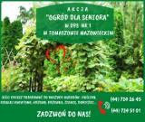 """Akcja """"Ogród dla seniora"""" w Tomaszowie. Wesprzyj roślinami domy pomocy społecznej w Tomaszowie"""