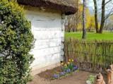 Dworek Marii Dąbrowskiej w Russowie. Wiosenne nasadzenia roślin w parku ZDJĘCIA