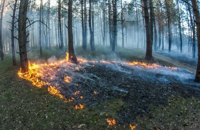 14-latek z powiatu świeckiego przyznał się do pięciu podpaleń.