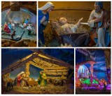 Nowy Sącz. Wyjątkowe szopki bożonarodzeniowe w kościołach [ZDJĘCIA]