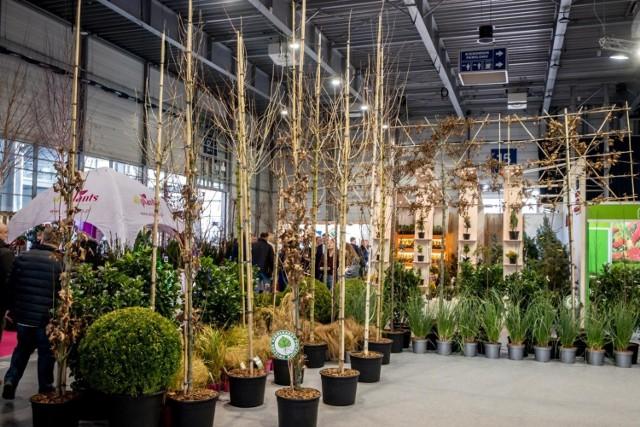 Letni Targ Ogrodniczy odbędzie się na Międzynarodowych Targach Poznańskich 20-21 czerwca 2020 roku. Koszt biletu - to 5 złotych.  Na zdjęciach są Targi Gardenia odbyły się w lutym tego roku.
